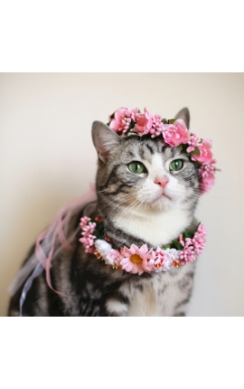 Cat Διακοσμητικό Στεφανάκι - Κολάρο