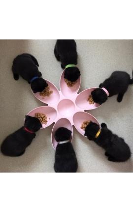 Pet Feeding Bowls
