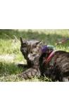 Kerbl Cat Harness Rainbow