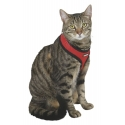 Kerbl Cat Harness Activ