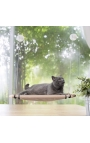Pawise Cat Sunny Seat